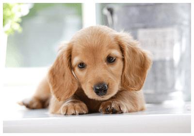 犬の画像 p1_22