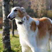 みんなの犬図鑑|グループから犬...
